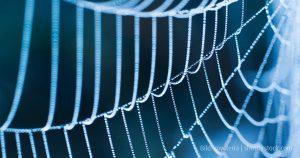 Spinn dir dein Netz mit der Kernkompetenz Networking